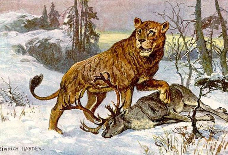 Illustration of a cave lion attacking a stag.