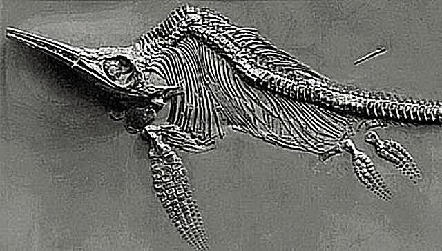 utatsusaurus