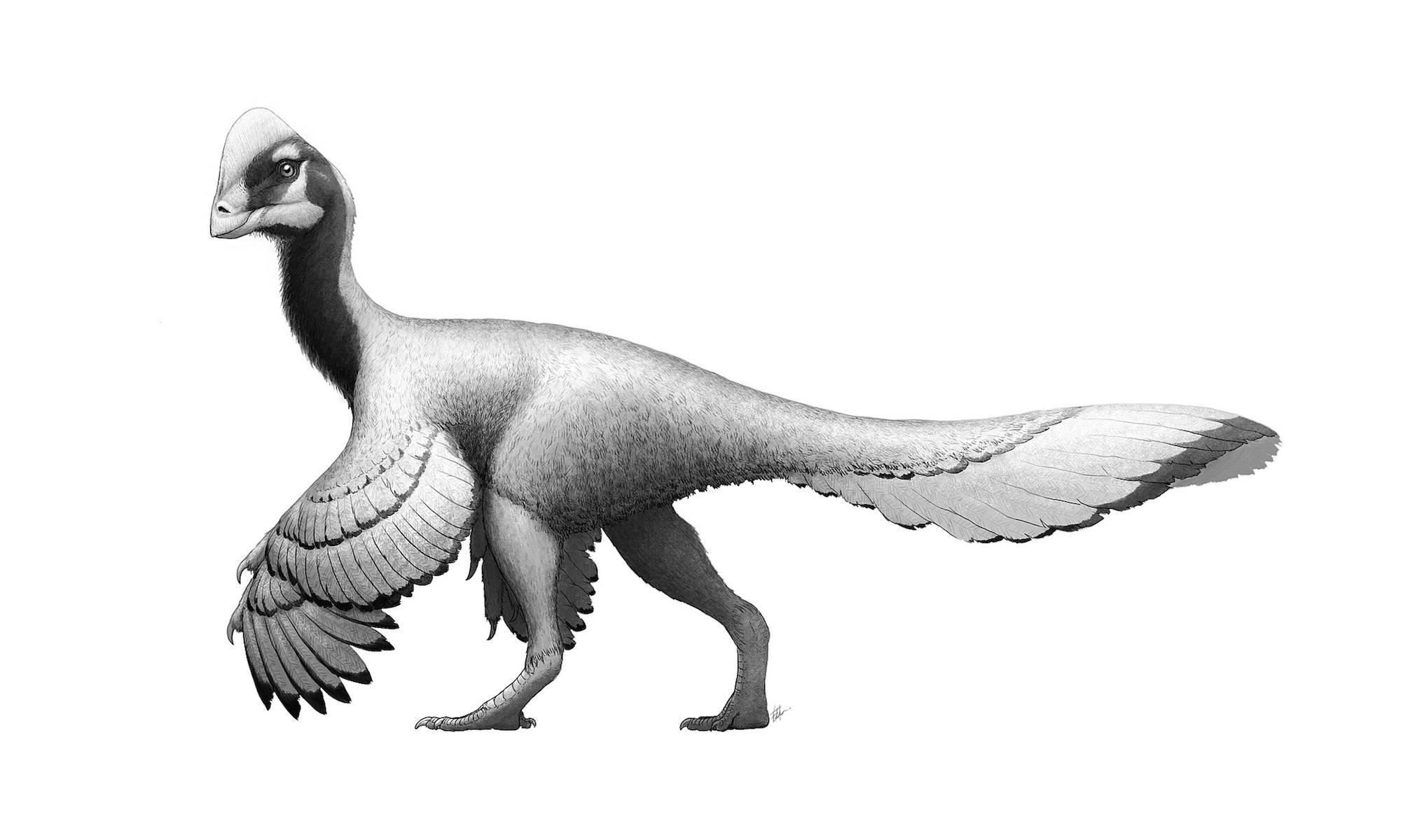 Anzu dinosaur