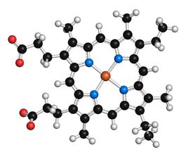 Heme is an example of a coenzyme or cofactor that contains both an organic and inorganic component