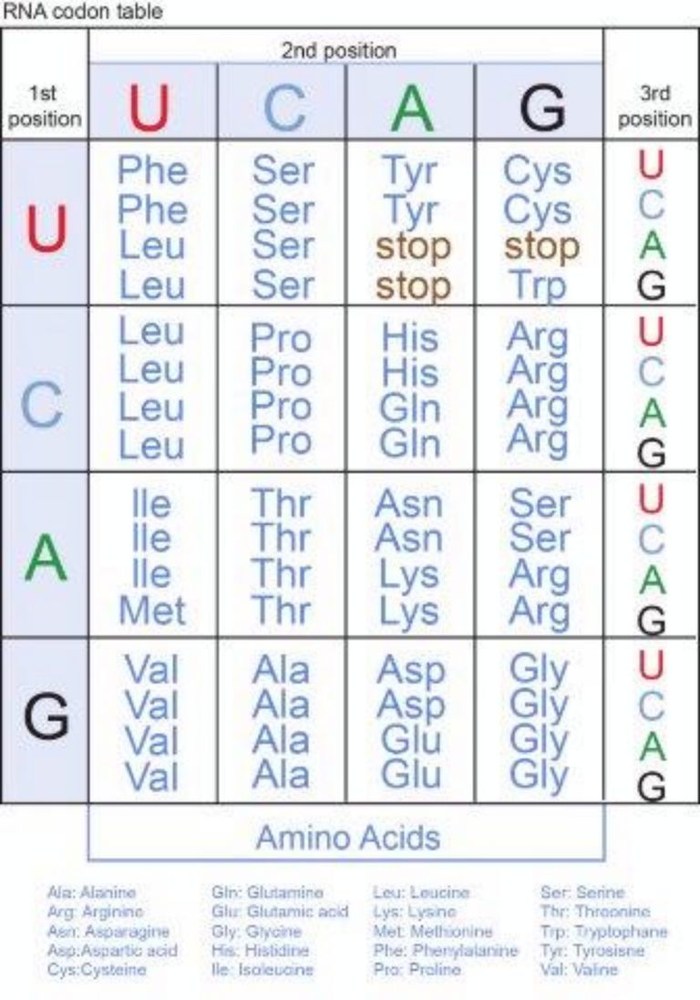 Genetic Code Table