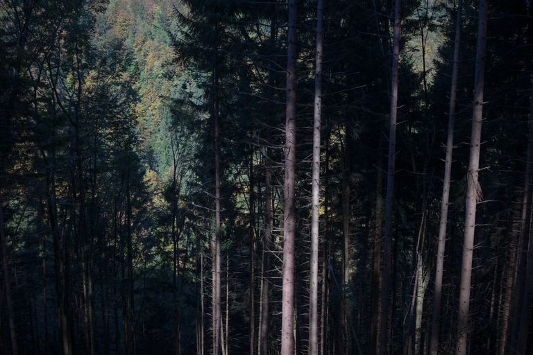 Full Frame Shot Of Trees In Forest