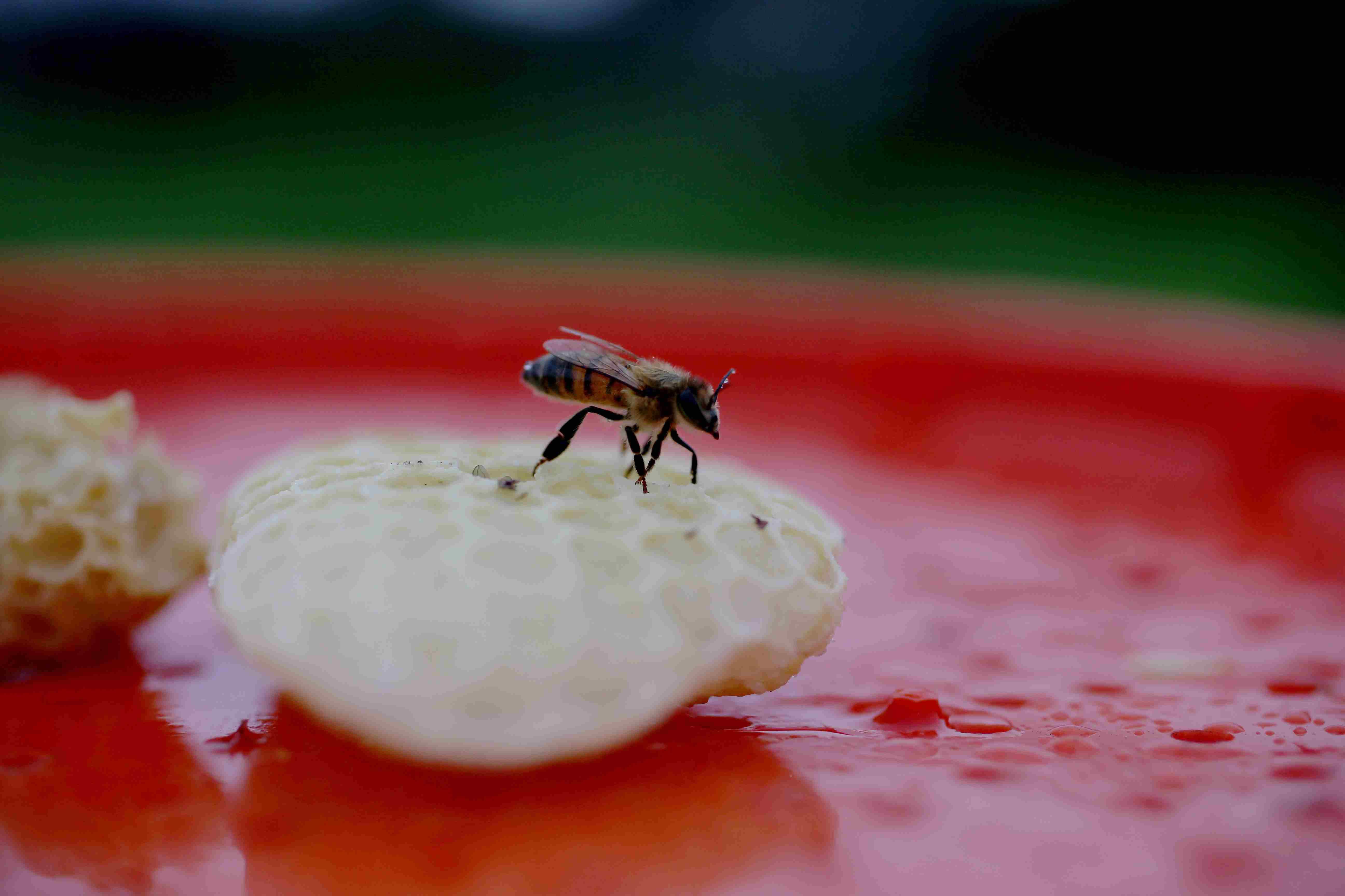Ο ειδικός της μέλισσας διασώζει ανεπιθύμητες κυψέλες στην προσπάθεια σταθεροποίησης του πληθυσμού των εντόμων