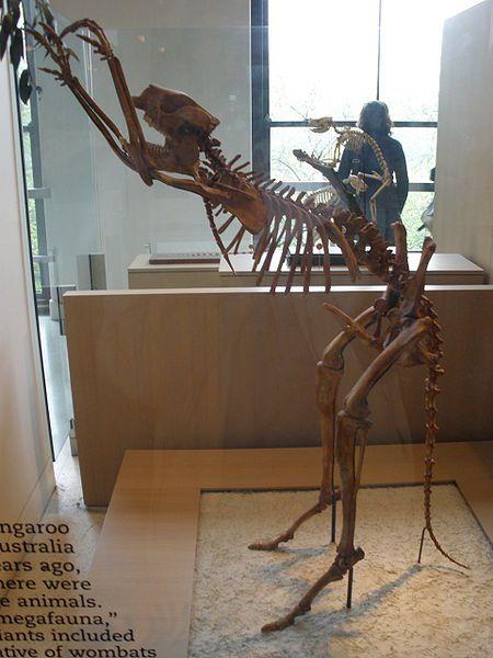 simosthenurus