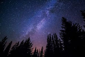 A starry sky above tall pine trees at night.