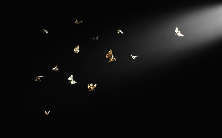 Moths flying in beam of light, black background