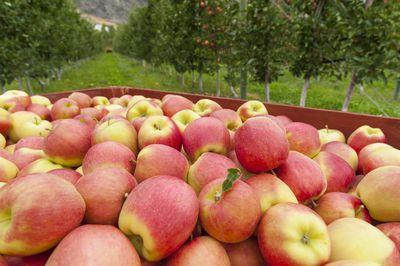 pomona the roman goddess of apples