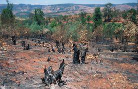 The Slash and Burn technique in Madagascar.