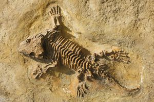 A complete fossilized skeleton found in rock