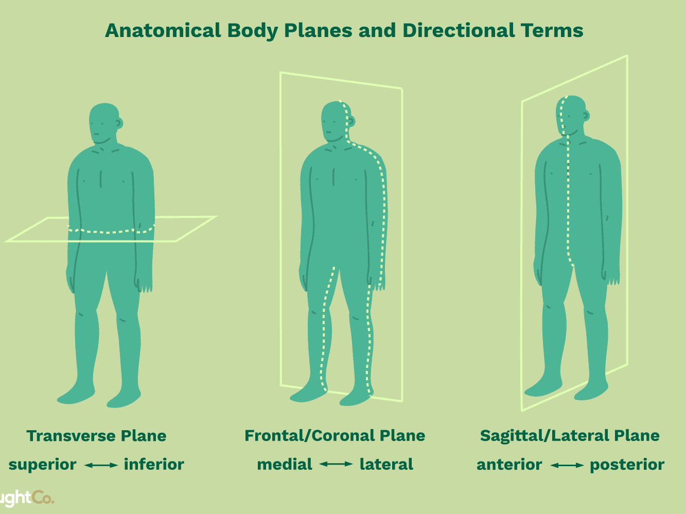 coronal plane means in medical term