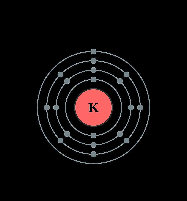 This diagram shows the electron shell configuration of a potassium atom.