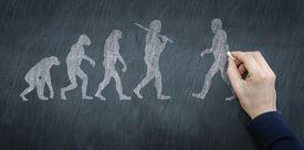 Chalkboard illustration of the progression of evolution.
