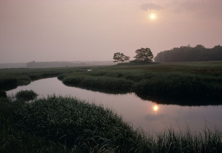 The Rachel Carlson Wildlife Refuge was named after an important environmental pioneer.