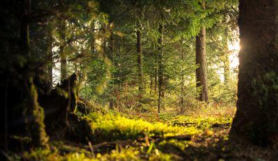 5 Ways to Apply Tree Herbicide