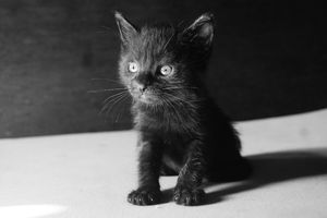 Close-Up Of Kitten Sitting Against Wall