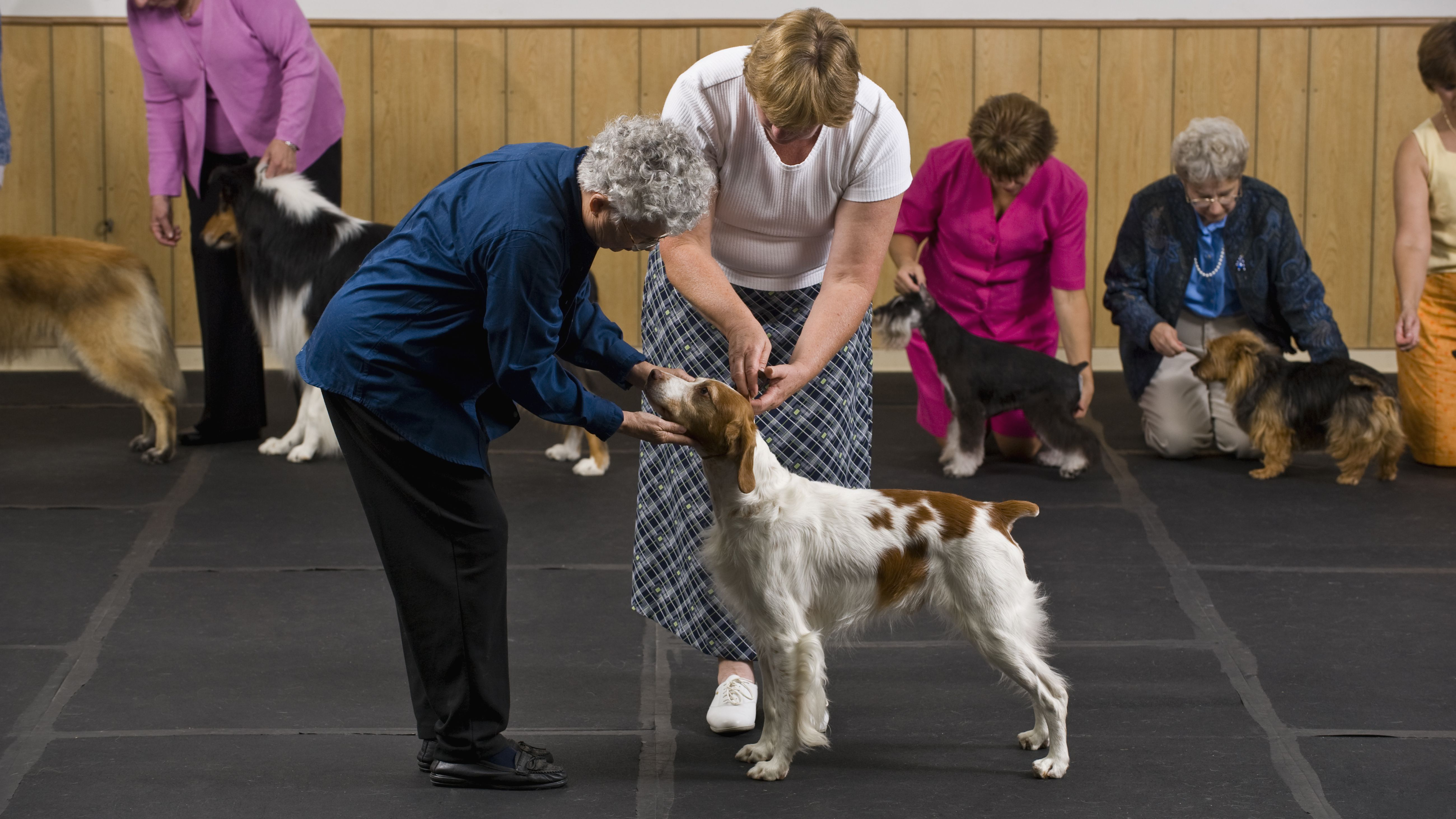 Why Animal Rights Activist Are Against the AKC