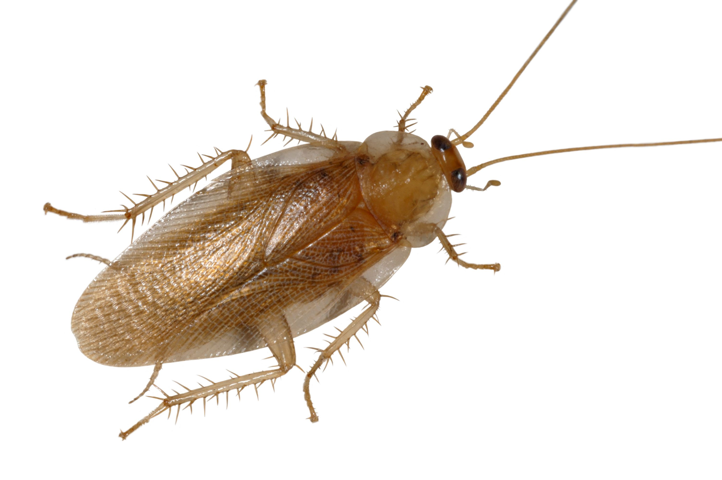 10 Fascinating Facts About Cockroaches