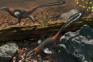 The Chinese feathered dinosaur Mei long