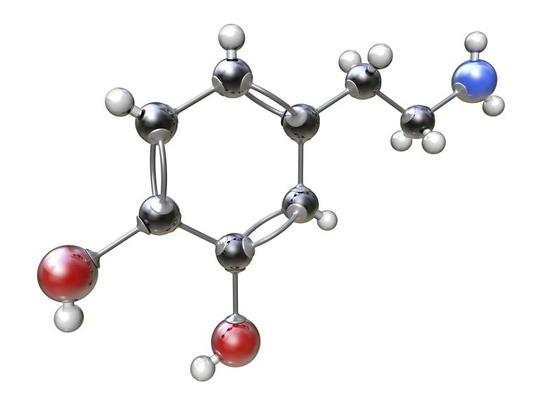 In molecular models, single bonds are represented by solid lines, while double bonds are represented by two lines between atoms.