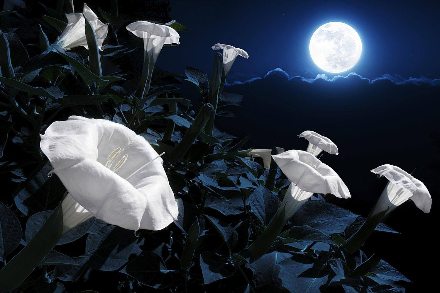 Flowers Blooming Under Moonlight