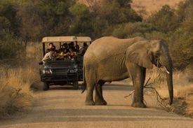 An elephant block traffic