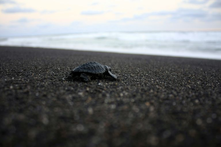 Indonesia Sea Turtles Conservation