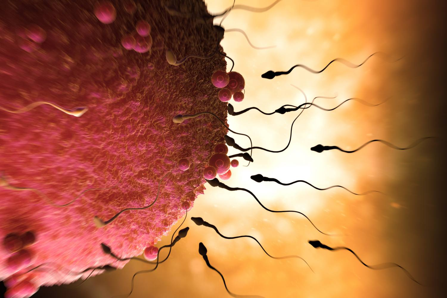 male and female sex cells are called in Bolton