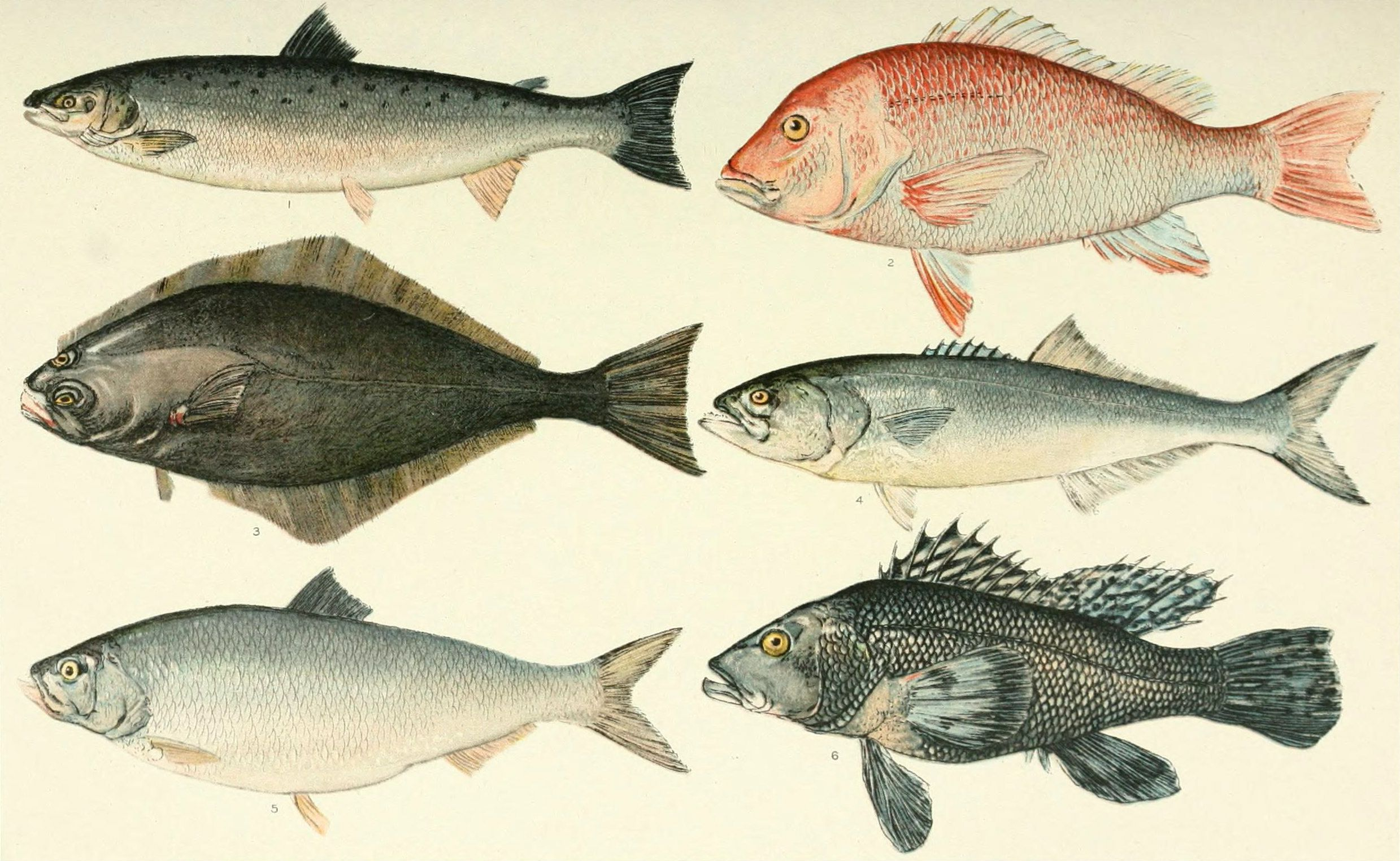 Fish Characteristics And Differences From Other Animals