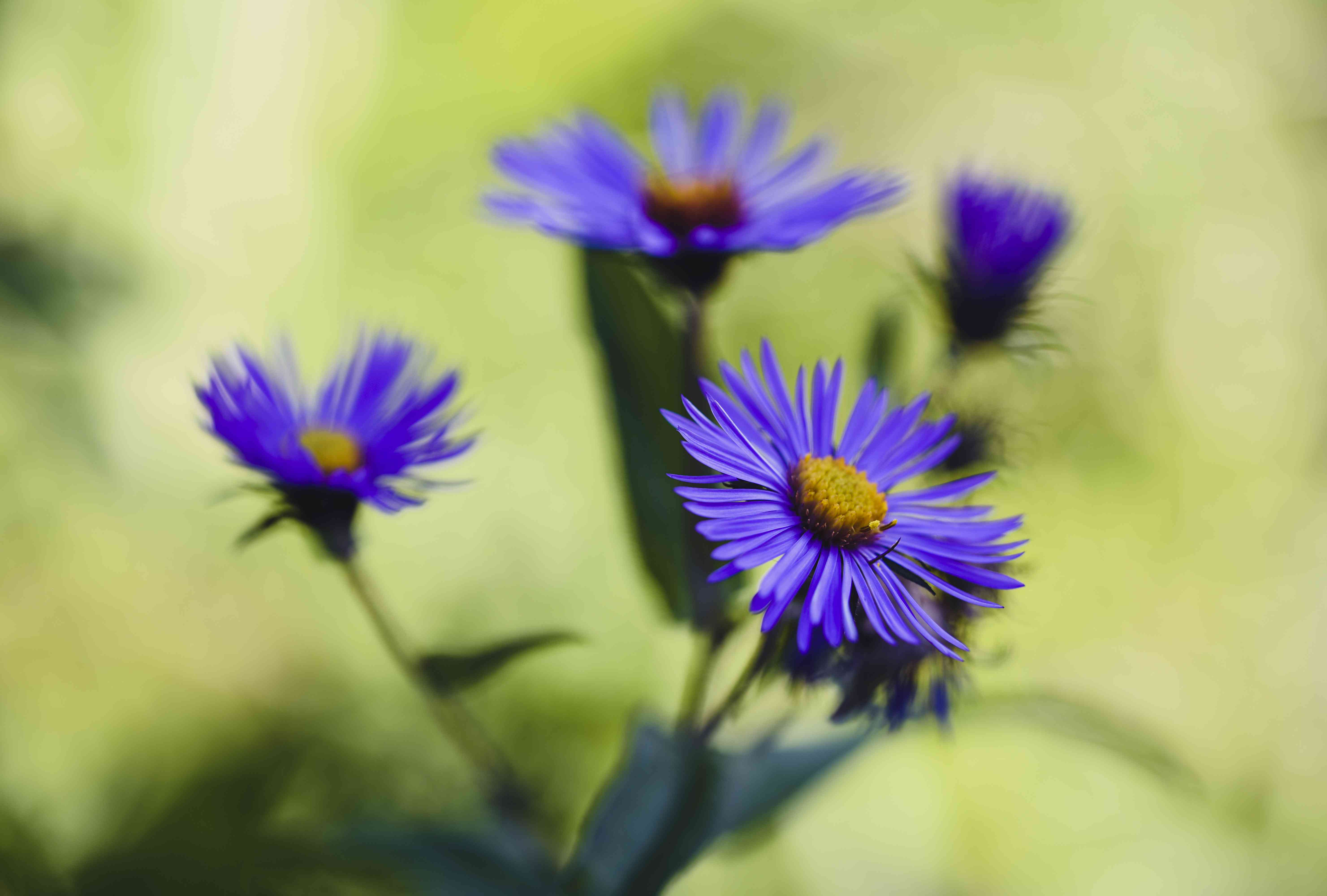 High angle view of New England aster growing in park