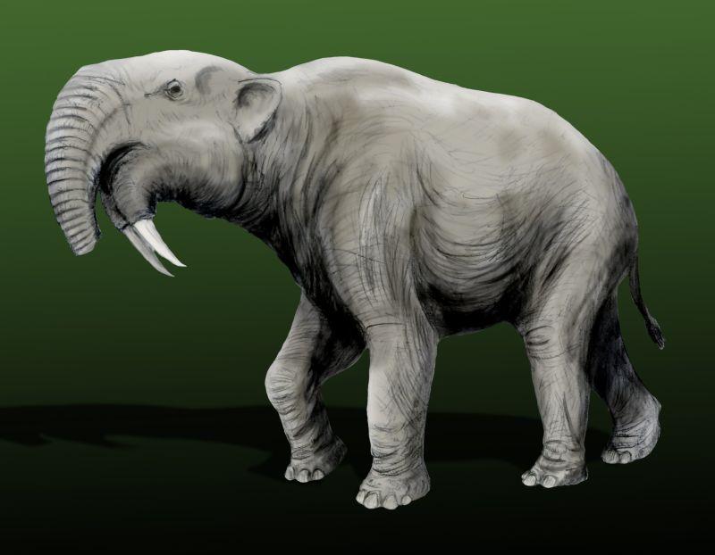 Deinotherium giganteum