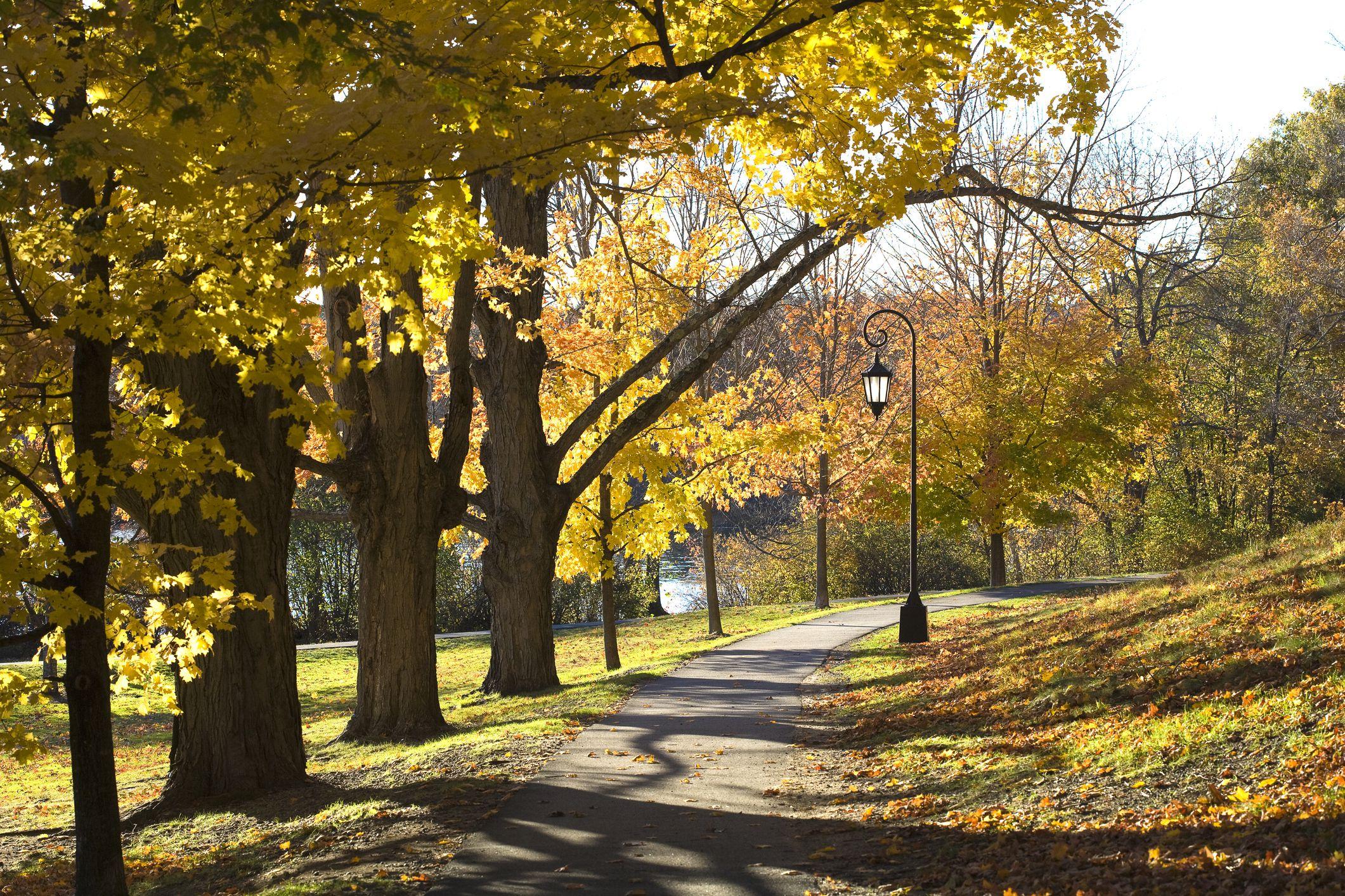 Walkway in fall, New England