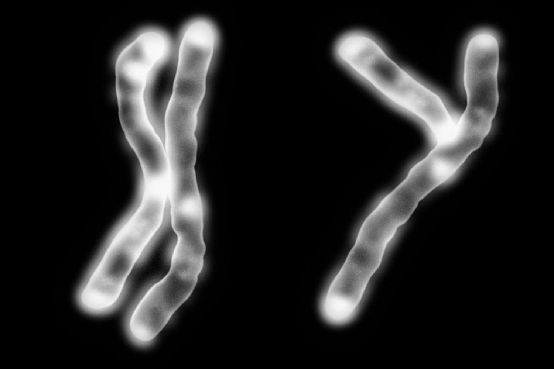 X & Y chromosomes