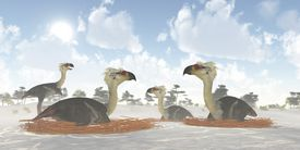 A male Phorusrhacos bird of prey watches over a colony of nesting females during the Miocene Era.