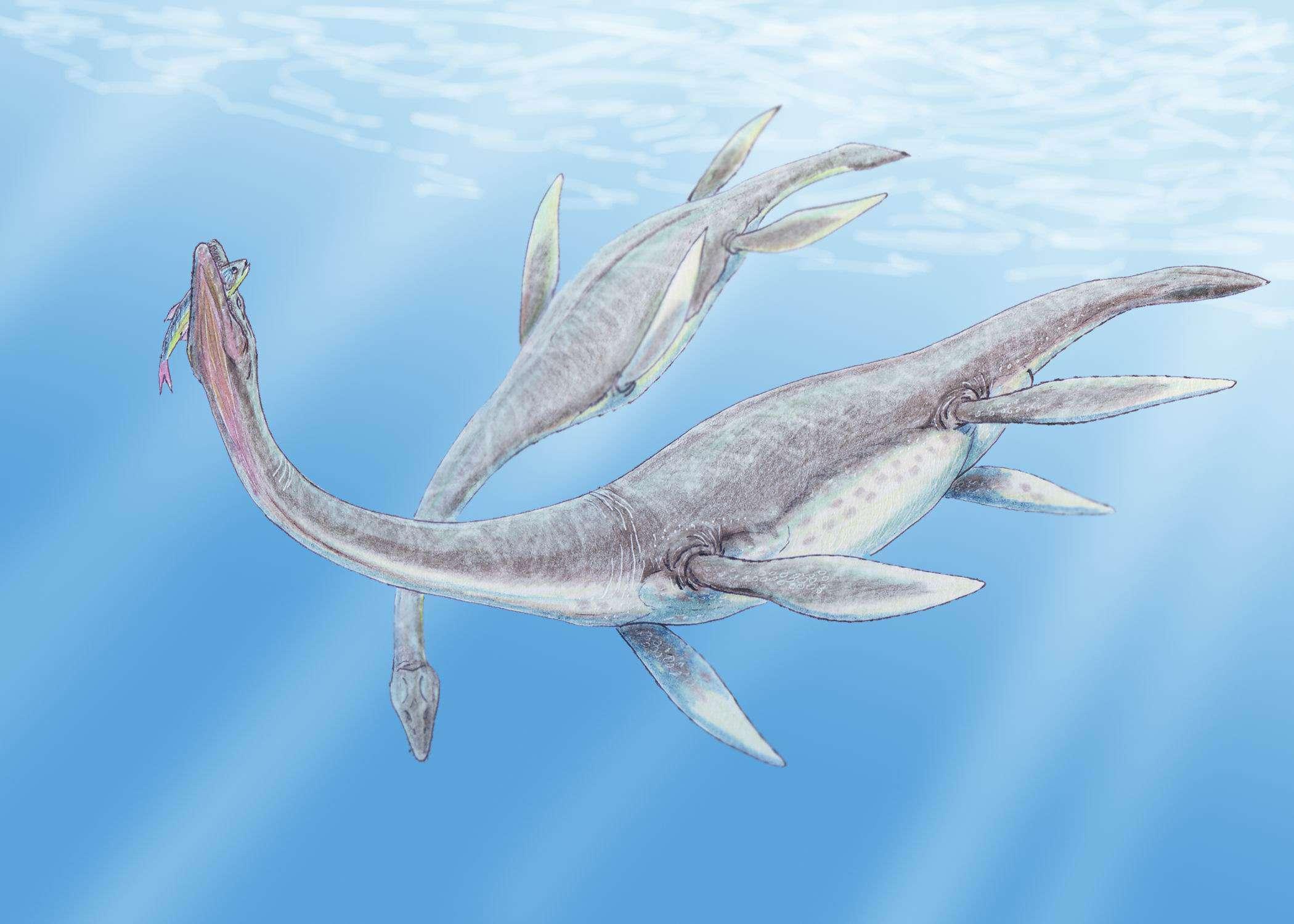 Plesiosaurus dolichodeirus