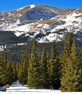 Mount Bross is covered with old roads and mines from Colorado's historic mining period.
