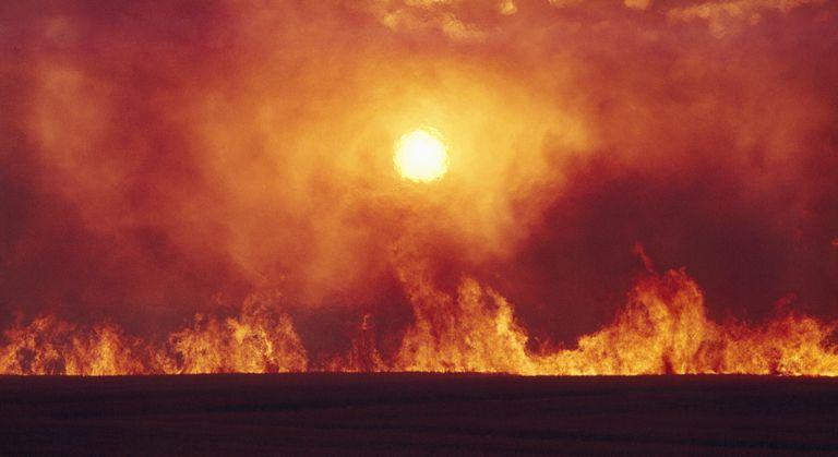 Burning wheat field