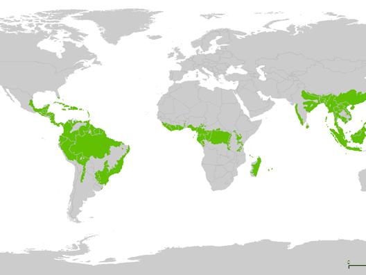 Tropical Rainforest Regions