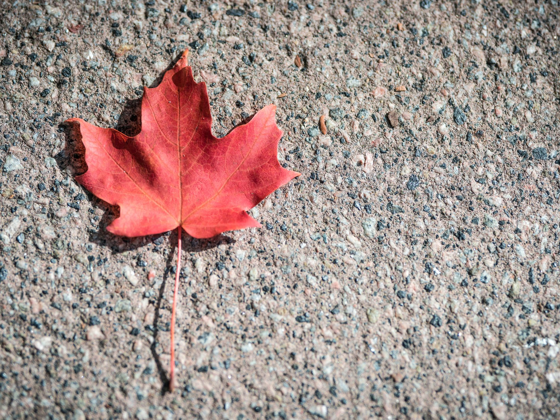 5 Most Common Maple Varieties In North America