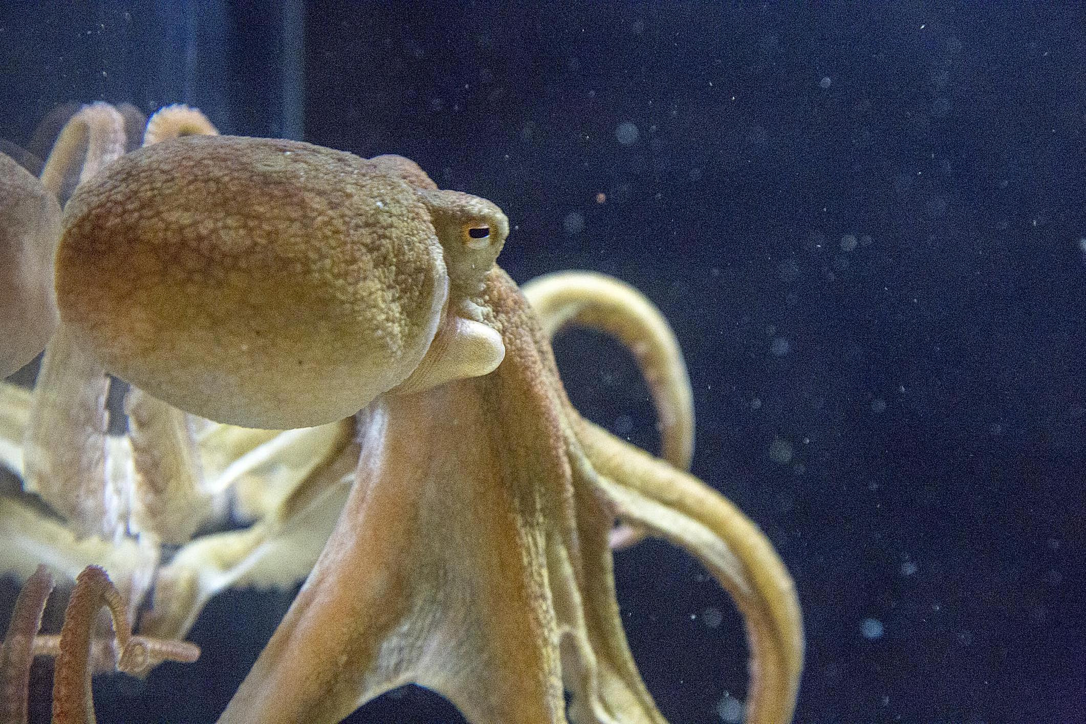 Mollusk Facts: Habitat, Behavior, Diet