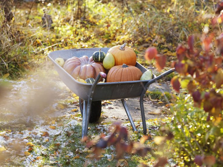 HarvestWheelbarrow_1500.jpg