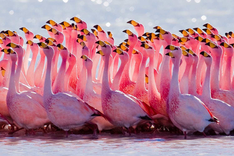 Flock of flamingoes standing in water