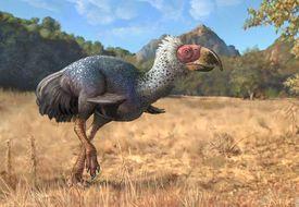 Titanis walleri, a flightless carnivorous bird from the Pleistocene epoch