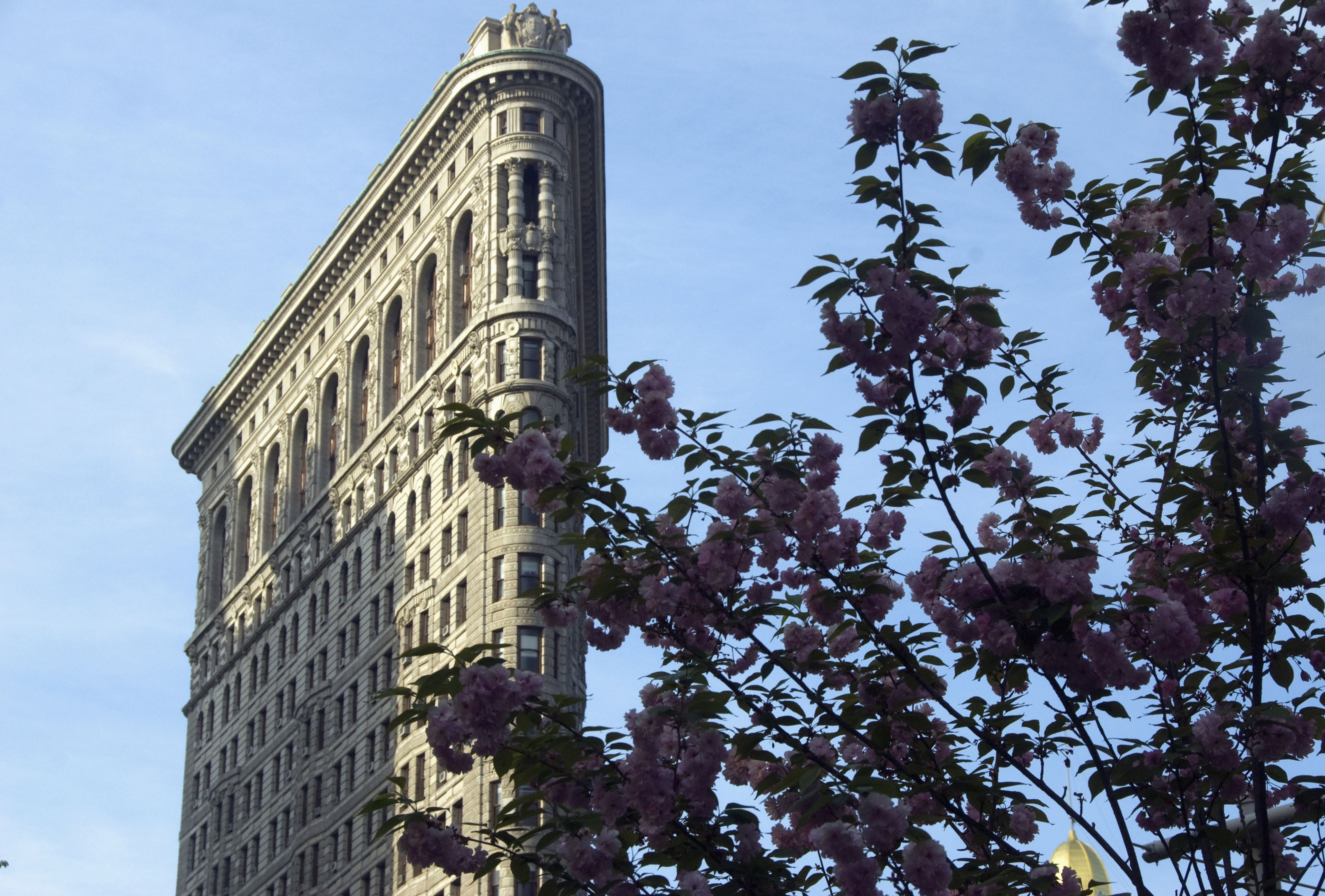 tall, thin, masonry high rise building, ornate, behind the branches of a tree