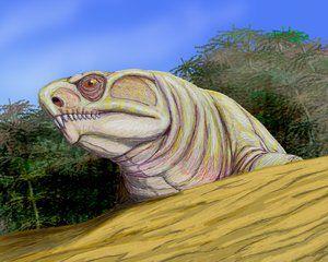 ennatosaurus
