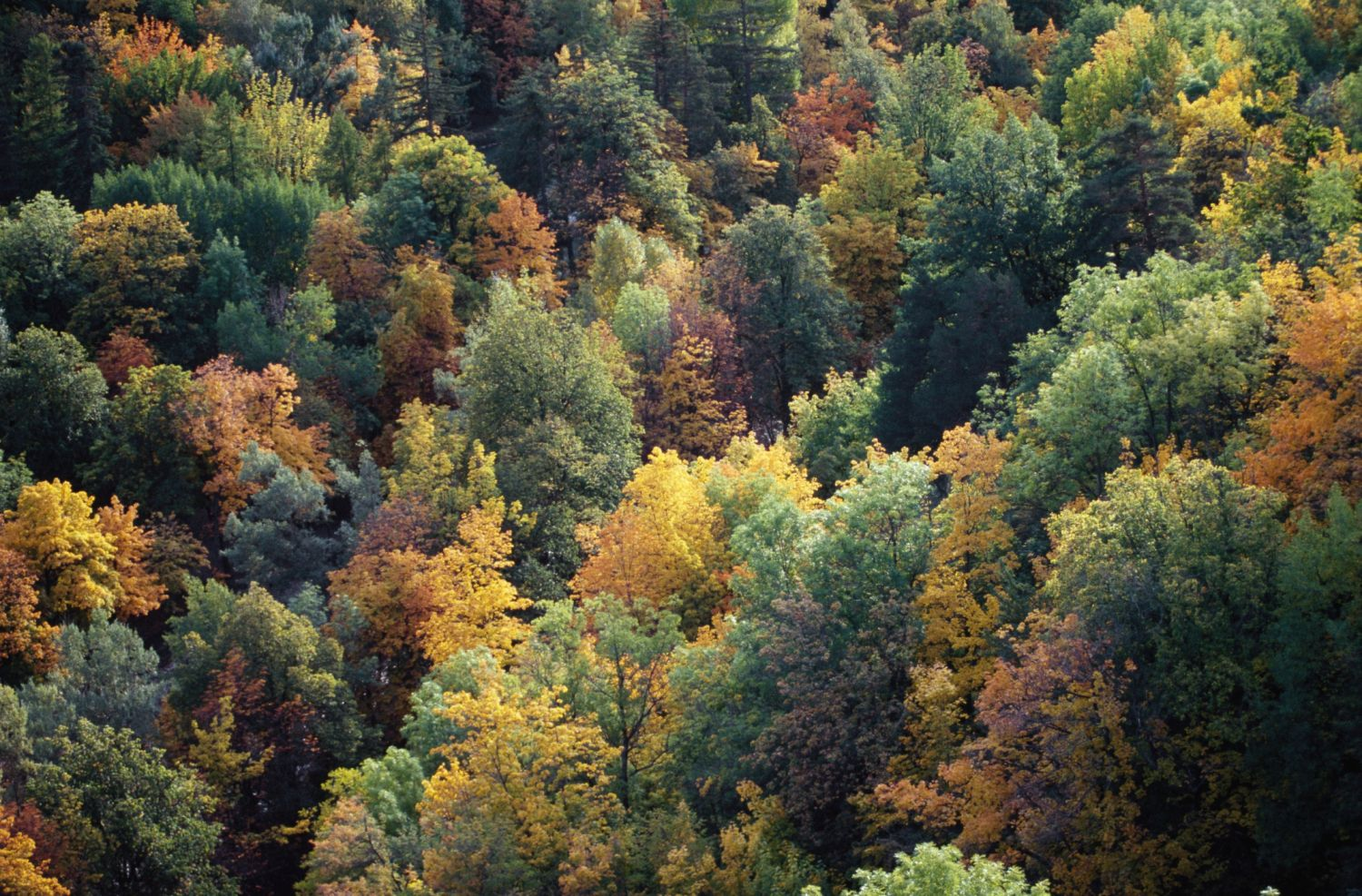 Land Biomes  Temperate Forests