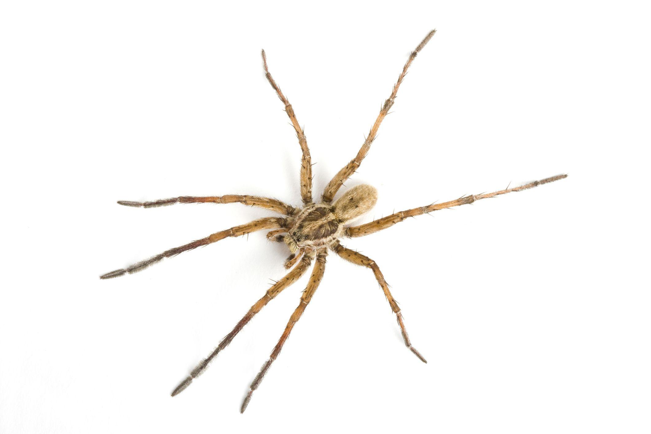 What Are Arachnids?