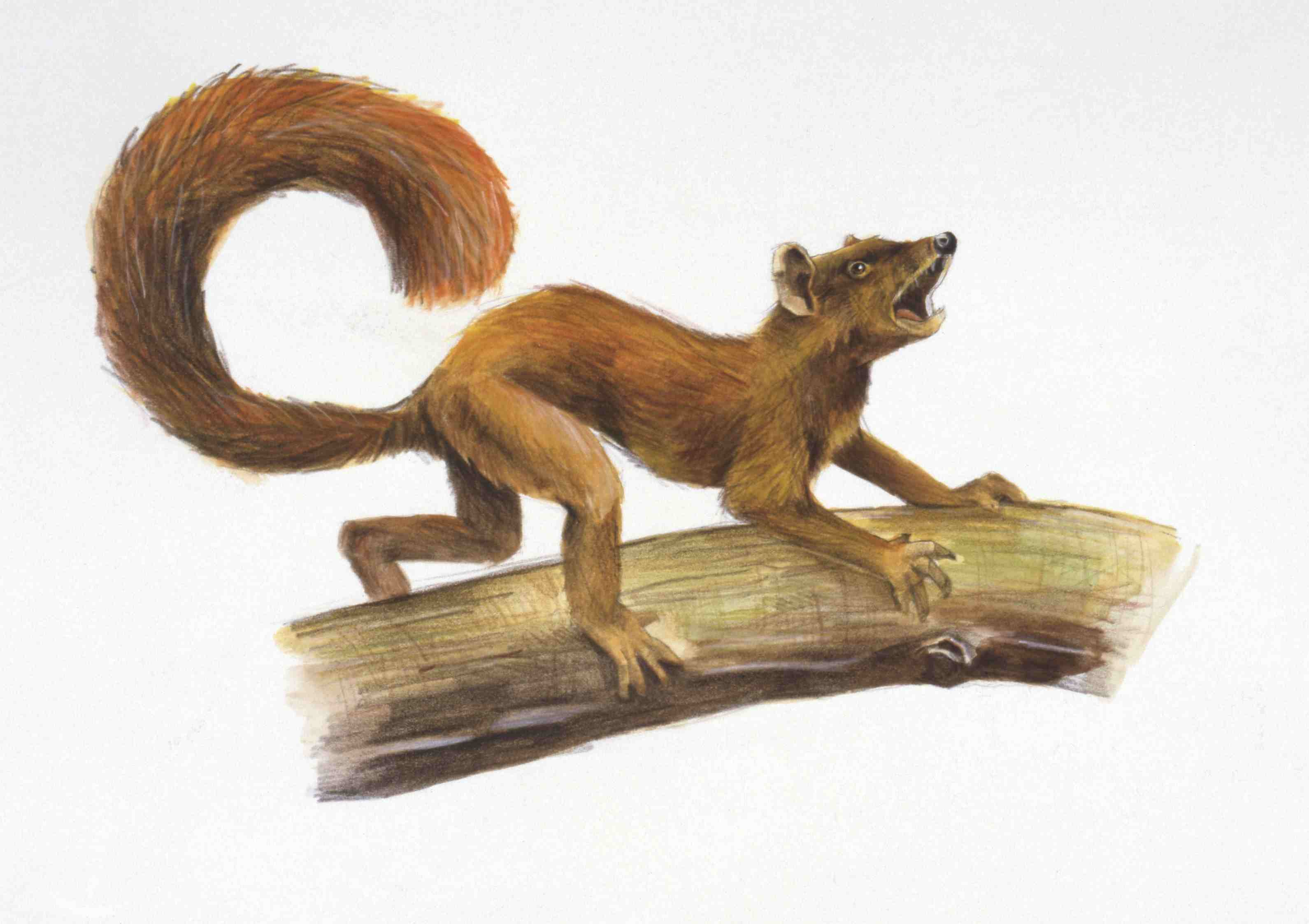 An artist's rendering of plesiadapis
