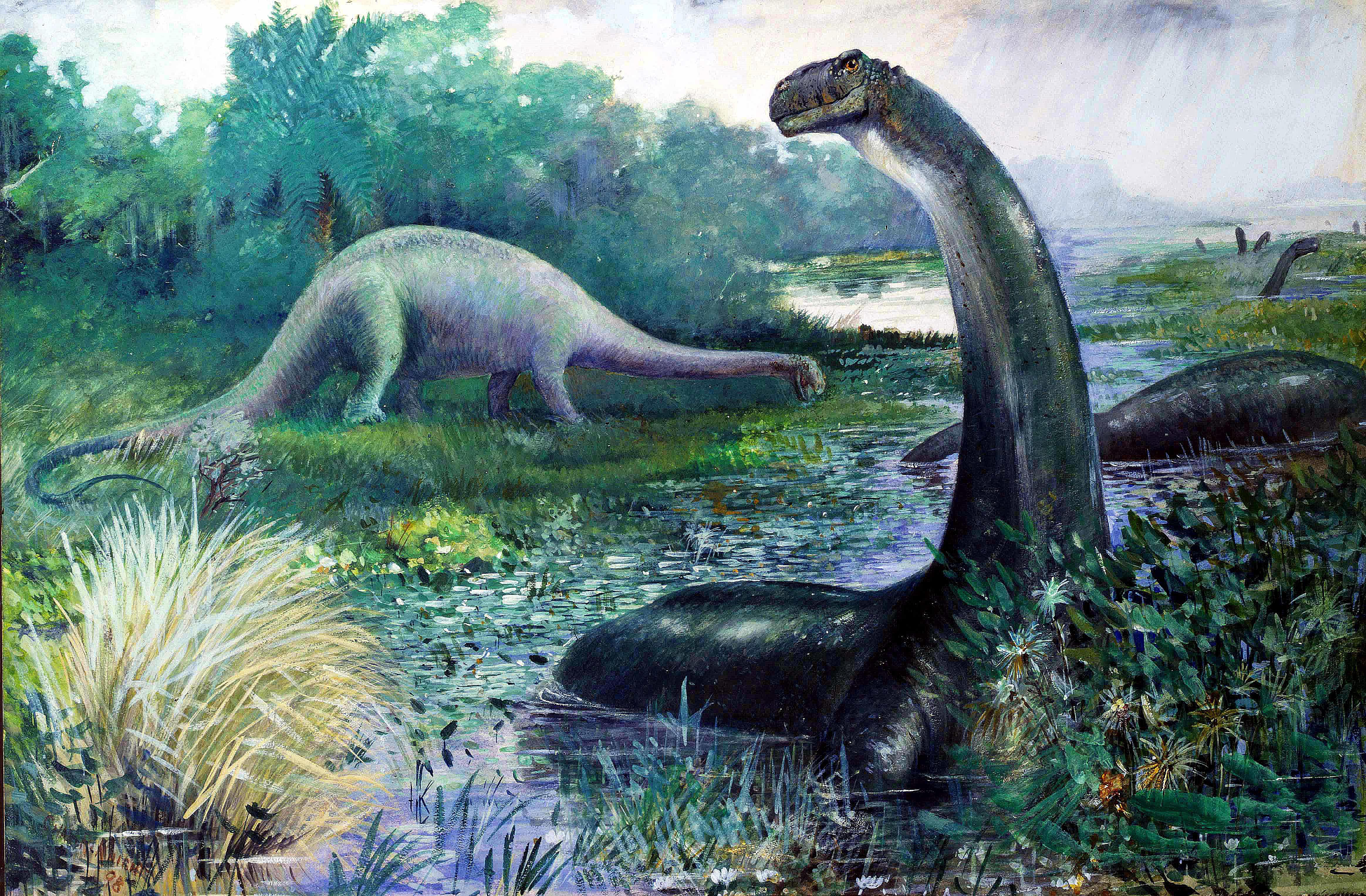 An outdated depiction of Apatosaurus
