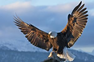 """The Aguilar surname and its derivations derives from a Latin term meaning """"haunt of eagles."""""""