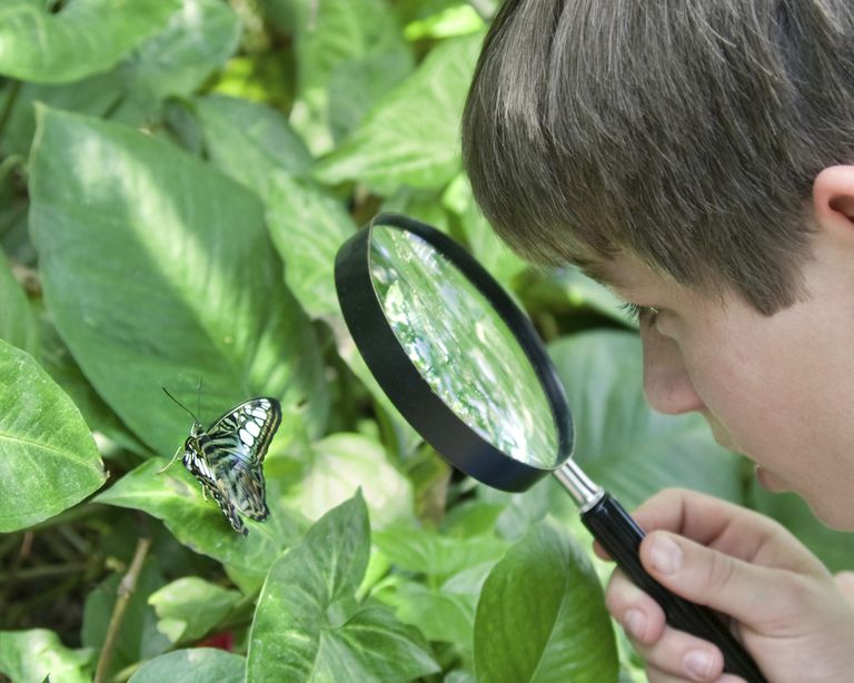 Boy looking at a butterfly.